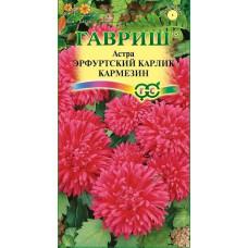 Астра Эрфуртский карлик Кармезин Гавриш