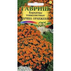 Бархатцы тонколист Карина оранжевая Гавриш