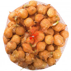 Лук-севок Центурион стандарт Голландия 0,5 кг