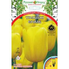 Тюльпан Российские гиганты Ермак (5 шт) луковицы