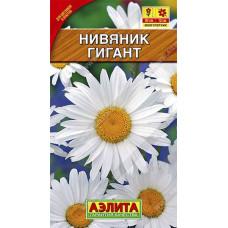 Нивяник Гигант крупноцветковый Аэлита