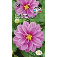 Георгина Санта-Марта фиолетовая
