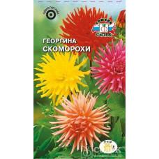 Георгина Скоморохи кактус смесь