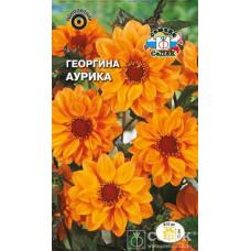 Георгина Аурика ярко-оранжевая