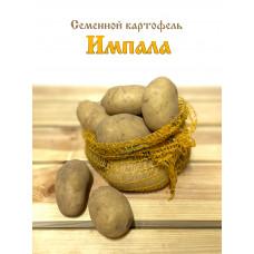 Картофель Импала весовой