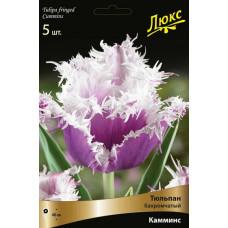 Тюльпан бахромчатый Камминс (10шт) луковицы