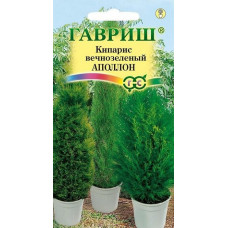 Кипарис вечнозеленый Апполон Гавриш