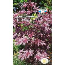 Клещевина Оракул темно-бордовый лист