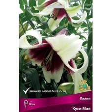 Лилия видовая Куси Мая Поиск 1шт