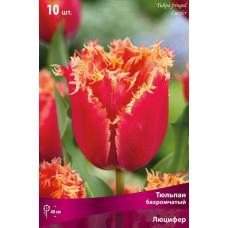 Тюльпан бахромчатый Люцифер (10шт) луковицы