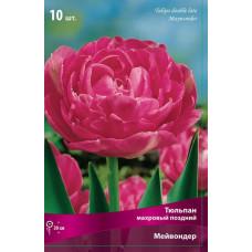 Тюльпан Махровый Мейвондер (10шт) луковицы
