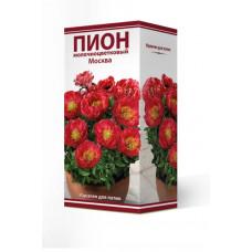 Пион травянистый Москва Поиск