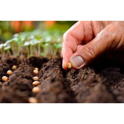 Посадочный сезон 2019: готовим семена к посеву