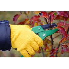 Лучший способ увеличения морозостойкости плодовых деревьев