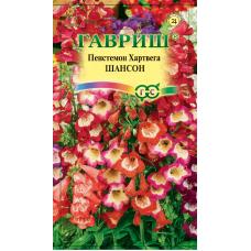 Пенстемон Хартвига Шансон наперстянковый многолет Гавриш