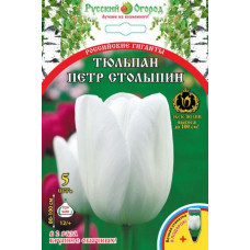 Тюльпан Российские гиганты Петр Столыпин (5 шт) луковицы