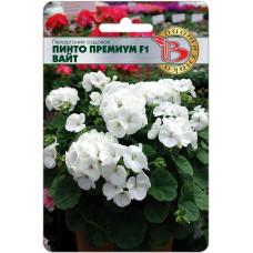 Пеларгония садовая Пинто Премиум F1 Вайт 5шт