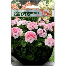 Пеларгония садовая Пинто Премиум F1 Вайт то Роуз 5шт