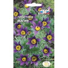 Прострел Сон-трава Магия синефиолетовая