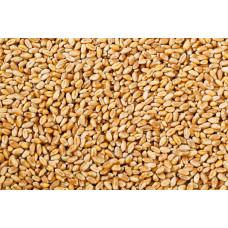 Зерно Пшеница 0,5 кг