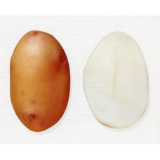 Картофель Радонежский 1кг