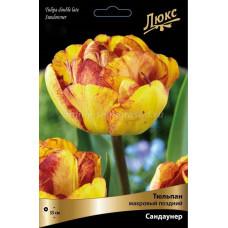 Тюльпан Махровый Сандаунер (10шт) луковицы