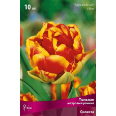 Тюльпан Махровый Силеста (10шт) луковицы