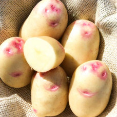 Картофель Синеглазка 1кг