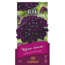 Скабиоза Чёрное манто пурпурная махр. Гавриш