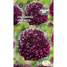 Скабиоза Лариса пурпурная